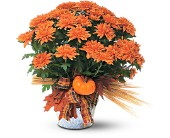 Bronze Cushion Mum Plant in McKees Rocks PA, Muzik's Floral & Gifts