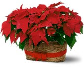 Double Poinsettia Basket in Monroe CT, Irene's Flower Shop