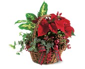 Holiday Planter Basket in Pella IA, Thistles