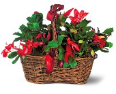 Christmas Cactus in Fairfield CT, Glen Terrace Flowers and Gifts