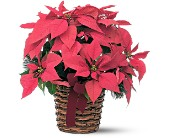 Poinsettia Basket in Warrenton VA, Designs By Teresa
