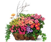 Deluxe European Garden Basket in San Jose CA, Rosies & Posies Downtown
