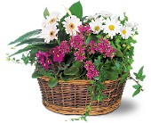 Traditional European Garden Basket in Lowell MA, Wood Bros Florist