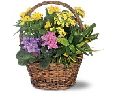 Petite European Basket in Wallingford CT, Barnes House Of Flowers