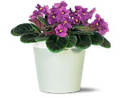 Purple African Violet in San Clemente CA, Beach City Florist
