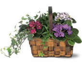 Mixed African Violet Basket in Monroe CT, Irene's Flower Shop