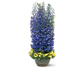 Distinguished Delphinium in San Clemente CA, Beach City Florist