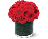 Red Gerbera Collection in Fairfield CA, Flower Basket
