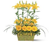 Yellow Garden Rows in Manalapan NJ, Rosie Posies