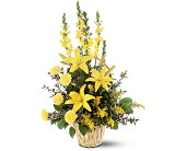 Arrangement floral Rayon d'espoir dans Watertown CT, Agnew Florist