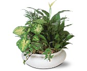 Green Garden Bowl in Sarasota, Florida, Aloha Flowers & Gifts