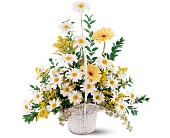 Drop of Sunshine Basket in Glen Burnie MD, Jennifer's Country Flowers