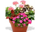 Patio Pots -Mix Plants in Homer NY, Arnold's Florist & Greenhouses & Gifts
