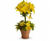 Yellow Fellow in Pearland TX, The Wyndow Box Florist