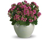 Bountiful Kalanchoe in Hilton NY, Justice Flower Shop