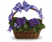 Violets And Butterflies Plant Bouquet, picture