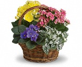 Spring Has Sprung Mixed Basket in Valley City OH, Hill Haven Farm & Greenhouse & Florist