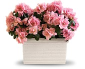 Sweet Azalea Delight in Loganville GA, Loganville Flower Basket