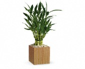 Teleflora's Good Luck Bamboo in Burnaby BC, Lotus Flower & Terra Plants