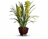 Teleflora's Splendid Orchids in flower shops MD, Flowers on Base