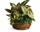 Emerald Garden Basket in Waldron AR, Ebie's Giftbox & Flowers