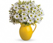 Teleflora's Sunny Day Pitcher of Daisies in Sherbrooke QC, Fleuriste Lijenthem