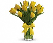 Sunny Yellow Tulips in Woodbridge NJ, Floral Expressions