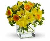 Teleflora's Daffodil Dreams in San Jose CA, Rosies & Posies Downtown