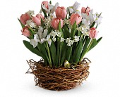 Tulip Song in North Manchester IN, Cottage Creations Florist & Gift Shop