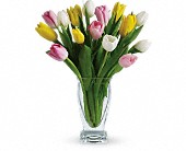 Teleflora's Tulip Treasure in Johnstown NY, Studio Herbage Florist