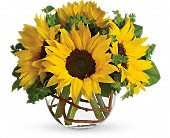 Sunny Sunflowers in Woodstock ON, Old Theatre Flowers