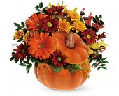 Teleflora's Country Pumpkin in San Jose CA, Rosies & Posies Downtown