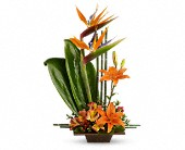 Teleflora's Exotic Grace in Traverse City MI, Cherryland Floral & Gifts, Inc.
