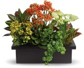 Stylish Plant Assortment in Waukegan IL, Larsen Florist