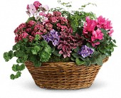 Simply Chic Mixed Plant Basket in Billerica MA, Candlelight & Roses Flowers & Gift Shop