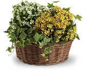Basket of Joy in Saratoga Springs NY, Dehn's Flowers & Greenhouses, Inc
