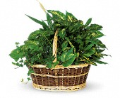 Large Basket Garden in Traverse City, Michigan, Cherryland Floral & Gifts, Inc.