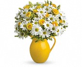 Teleflora's Sunny Day Pitcher of Daisies DX in Aston PA, Wise Originals Florists & Gifts