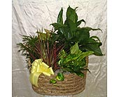 Mixed Variety in Kentwood LA, Glenda's Flowers & Gifts, LLC
