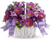 Daisy Daydreams in Bound Brook NJ, America's Florist & Gifts