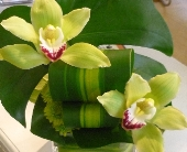 Double Cymbidium Orchid in Tacoma WA, Grassi's Flowers & Gifts