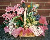 Living Blooming Basket in Portsmouth OH, Kirby's Flowers