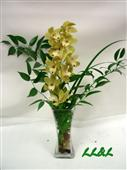 Cymbidium Orchid in Belleville ON, Live, Love and Laugh Flowers, Antiques and Gifts