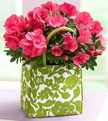 Blooming Plant in a Tote in Highlands Ranch CO, TD Florist Designs