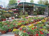 Sitting Planters in Belleville ON, Live, Love and Laugh Flowers, Antiques and Gifts
