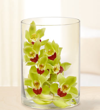 Modern Orchid in Cylinder Vase in Highlands Ranch CO, TD Florist Designs