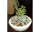Succulent Bowl in Thornhill ON, Wisteria Floral Design