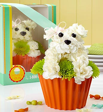 Pup-Cake in Bloom in Woodbridge VA, Lake Ridge Florist
