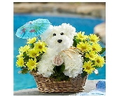 Doggie Paddle in Bradenton FL, Ms. Scarlett's Flowers & Gifts