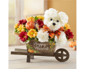 A-dog-able for Fall in Bradenton FL, Ms. Scarlett's Flowers & Gifts